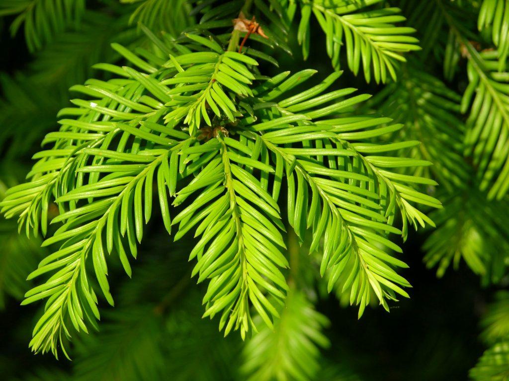 evergreen-content
